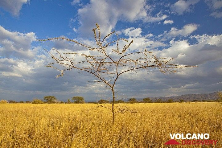 Die Steppe des Awash Nationalparks (Photo: Tom Pfeiffer)