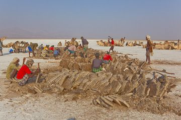 Since early dawn, Afar and Tigrian workers have been present at the current working site on the salt lake. They break the hard crust, then shape pieces into neatly cut salt blocks. This hard work has been unchanged since Biblical times.  (Photo: Tom Pfeiffer)