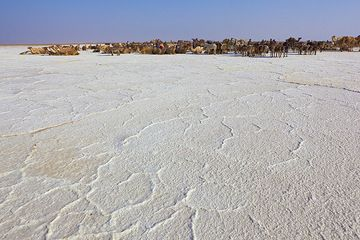 The current site of the salt works on the salt lake. Hundreds of workers, camels and donkeys crowd in the area, but despite the seemingly chaos, the works are very well organized, and follow strict ancient rules defined by the tradition of the Afar tribe who own the precious salt. (Photo: Tom Pfeiffer)