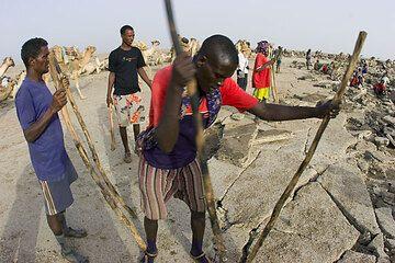 """Salzbrecher bei der Arbeit. Die oberen 10 cm der Salzkruste des Sees weren verarbeitet. Die """"Focolo"""" genannten Salzbrecher sind meist Gastarbeiter aus Tigray, die sich in diesem harten Geschäft ein Auskommen verdienen. (c)"""