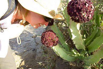 Eine Kaktee mit scheußlich riechenden Blüten... Näher will Karinna mit ihrer Nase nicht ran. (c)
