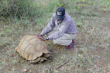 Solomon at a giant turtle (Photo: Tom Pfeiffer)