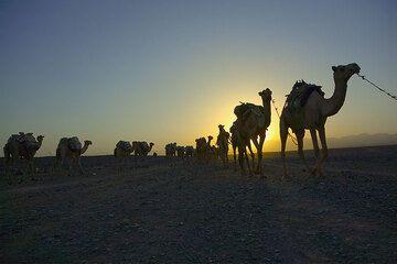ethiopia_g11736.jpg (Photo: Tom Pfeiffer)