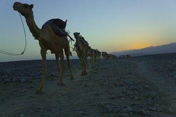ethiopia_g11755.jpg (Photo: Tom Pfeiffer)