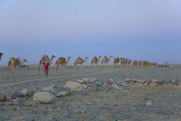 ethiopia_g11774.jpg (Photo: Tom Pfeiffer)