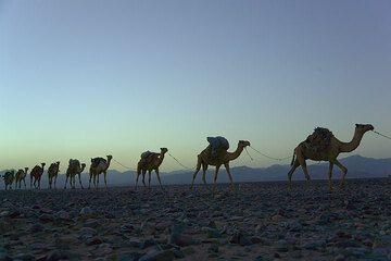 ethiopia_g11775.jpg (Photo: Tom Pfeiffer)