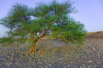 ethiopia_g12110.jpg (Photo: Tom Pfeiffer)