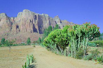 ethiopia_g12446.jpg (Photo: Tom Pfeiffer)