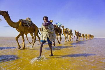 Camel caravan on the salt lake Asale in the northern Danakil desert, Ethiopia (Photo: Tom Pfeiffer)