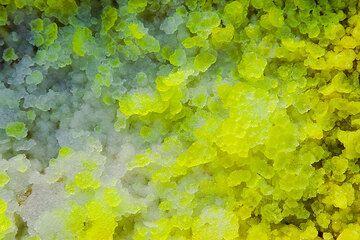 White, yellow and greenish salt crystals (Photo: Tom Pfeiffer)