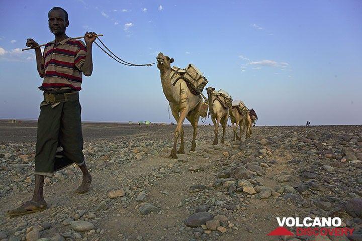 Eine mit Salzblöcken beladene Kamelkaravane verlässt Ahmed Ela. (Photo: Tom Pfeiffer)