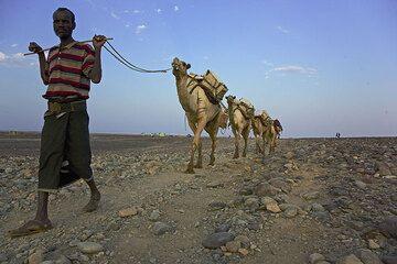 A caravan loaded with blocks of salt is leaving Ahmed Ela. (Photo: Tom Pfeiffer)