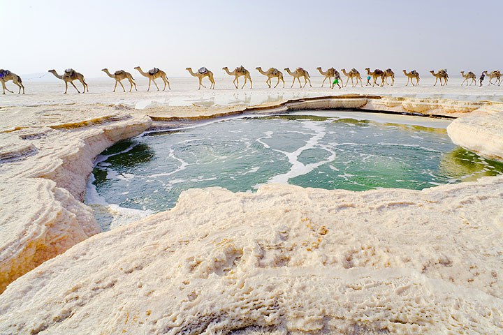 Warm water spring forms a bubbling green water pond in the middle of the salt plane, Lake Assale, Danakil desert, Ethiopia. A camel caravan passes on its way to the salt works. (Photo: Tom Pfeiffer)