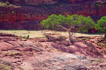 Red sandstone (Photo: Tom Pfeiffer)