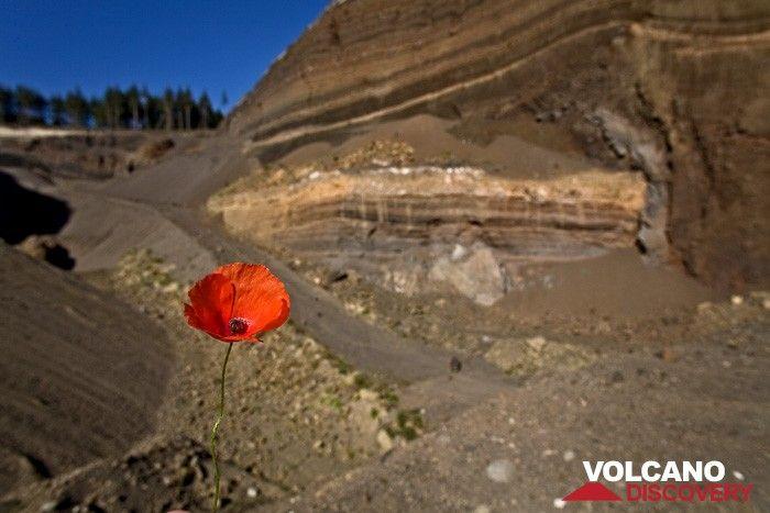The Eppelsberg volcano quarry (Photo: Tobias Schorr)
