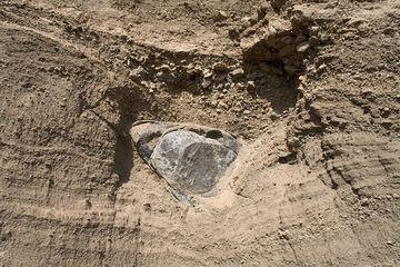 Einschlag einer vulkanischen Bombe des Vulkanausbruchs des Laacher See Vulkans in 9900 v.Chr. (Photo: Tobias Schorr)