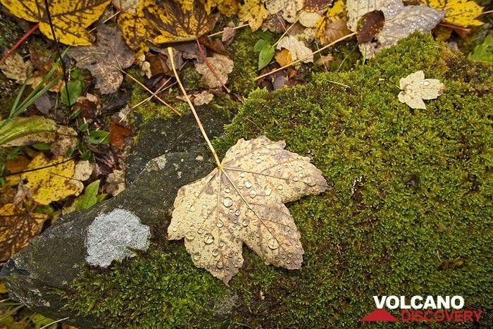 De Herbst kommt... (Photo: Tobias Schorr)