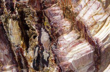 Petrified wood on Lesbos Island, Greece (Photo: Tom Pfeiffer)