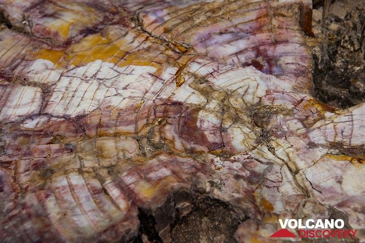 Detail of fossilized wood on Lesbos' petrified forest (Photo: Tom Pfeiffer)
