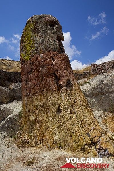Giant petrified tree about 5 m in diameter on Lesbos island, Greece (July 2011) (Photo: Tom Pfeiffer)