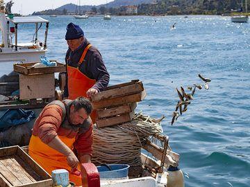 Fisher man who throws unsaleable fish back to the sea at Poros island. (Photo: Tobias Schorr)