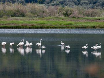 Flamingos at the Psifta lake. (Photo: Tobias Schorr)