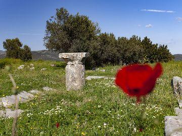 The last preserved Dorian column of the ancient sanctuary / hospital ASKLEPION of Troezen excavation. (Photo: Tobias Schorr)