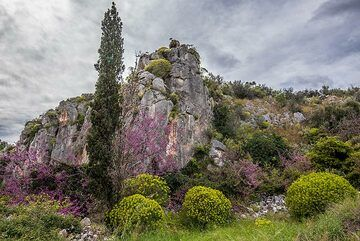 Cypress (Photo: Tom Pfeiffer)