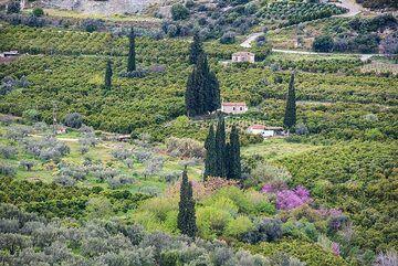Fields with cypresses (Photo: Tom Pfeiffer)