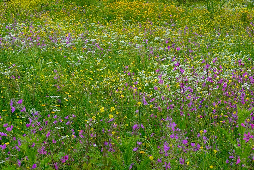 Spring meadow (1) (Photo: Tom Pfeiffer)