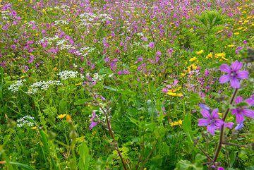 Spring meadow (4) (Photo: Tom Pfeiffer)