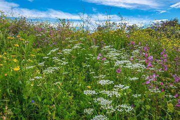 Spring meadow (5) (Photo: Tom Pfeiffer)