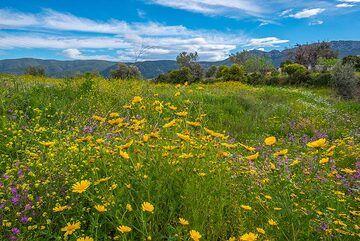 Spring meadow (6) (Photo: Tom Pfeiffer)
