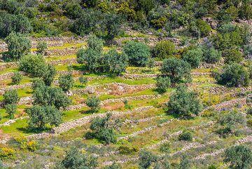 Terraced fields (Photo: Tom Pfeiffer)