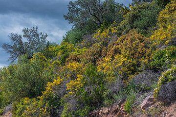 Mediterranean macchia (Photo: Tom Pfeiffer)