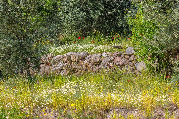 Dry stone wall (Photo: Tom Pfeiffer)