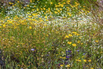 Spring meadow (Photo: Tom Pfeiffer)