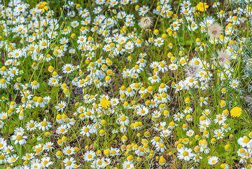 Flowers (Photo: Tom Pfeiffer)