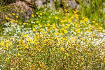 Spring meadow (2) (Photo: Tom Pfeiffer)