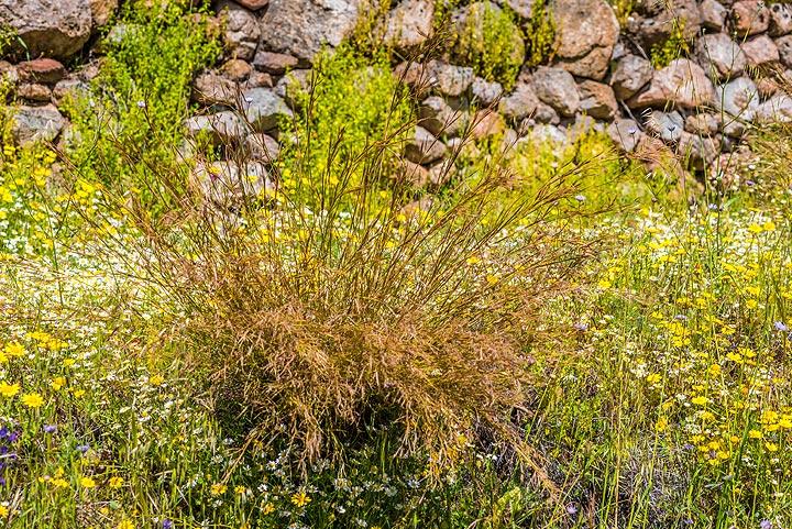 Spring meadow (3) (Photo: Tom Pfeiffer)