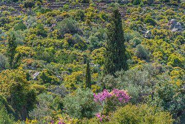 Lonely cypress (Photo: Tom Pfeiffer)