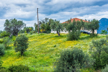 Olive grove at Metamorphosis village (Photo: Tom Pfeiffer)