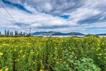 Methana peninsula behind the meadow. (Photo: Tom Pfeiffer)