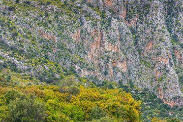 Steep limestone cliffs (Photo: Tom Pfeiffer)