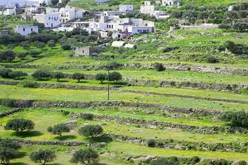 Terraced fields near Tripiti (Milos) (Photo: Tom Pfeiffer)