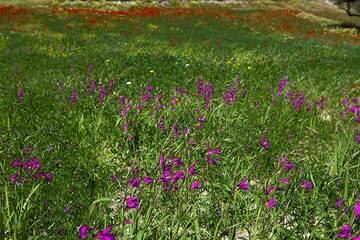 Milos Island (Greece) tour April 2012 - Kalamos and spring time on Milos (Photo: Tom Pfeiffer)