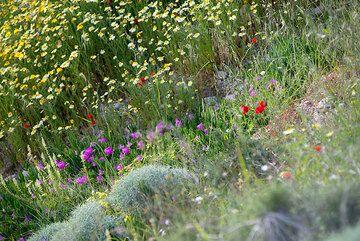 Spring flowers (Photo: Tom Pfeiffer)