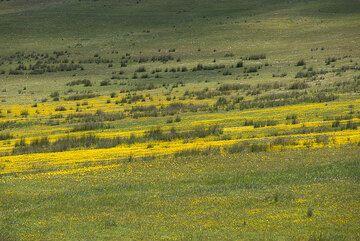 Spring-time meadow in the crater basin of Tsingrado volcano. (Photo: Tom Pfeiffer)