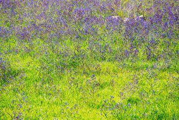 Purple and green (Photo: Tom Pfeiffer)