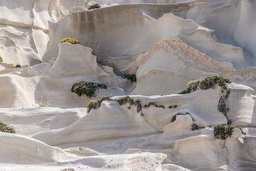 Typical surface of the pumice breccia deposit near Sarakiniko. Only few plants manage to find space for their roots in tiny fractures or protected corners. (Photo: Tom Pfeiffer)